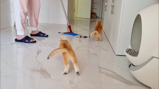 """Cleaning Company """"Fluffy kittens"""" will always help me in cleaning the house 😂"""