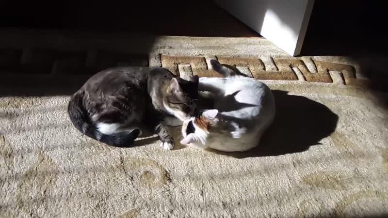 Маруся и Алиса Марьяны Балобан Волк Карантинные солнечные ванны