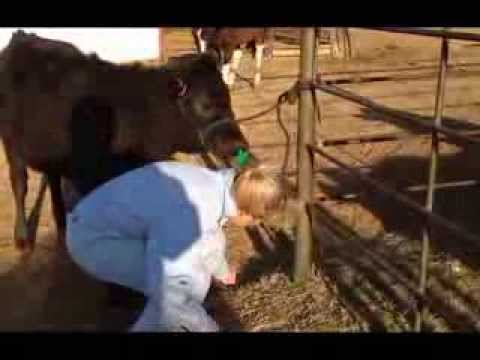 Putting in a weaning ring and the results