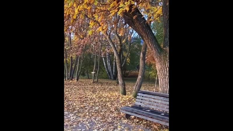 Листопад в Александровском саду