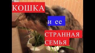 """СЕМЕЙКА """"АДАМС"""" или ПРИКЛЮЧЕНИЯ БАБАСИ /средство от горла"""