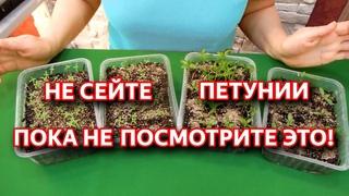 Посев петунии. Простой способ выращивания петунии. Посев семян петунии на рассаду.