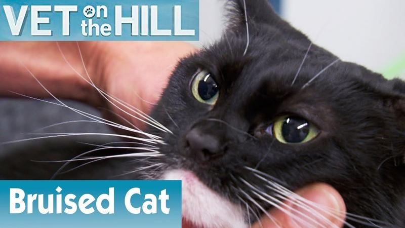 Ветеринар на холме Потерялась побитая кошка 2 сезон 1 серия Bruised Cat Is Lost S02E01 Vet On The Hill