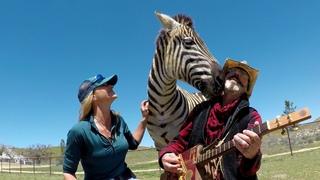 Zebra loves Johnny Cash & June Carter Song Jackson
