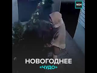 Нижегородки украли новогоднюю ёлку из подъезда — Москва 24