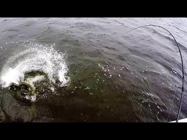 Голодные Щуки Атакуют Приманки в Жару Рыбалка на Спиннинг Джиг
