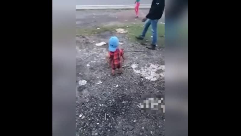 Маленький защитник