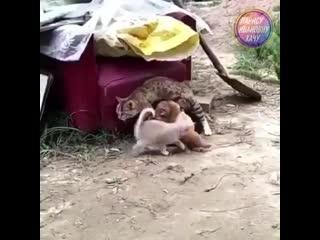 Ты не ты, когда голоден