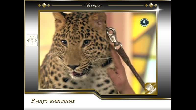 В мире животных с Николаем Дроздовым от 2011 02 05 Выпуск 16
