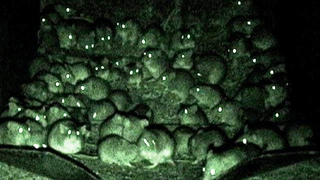What's happening in this World: Hordes of mice have invaded Australia and another Meteorite