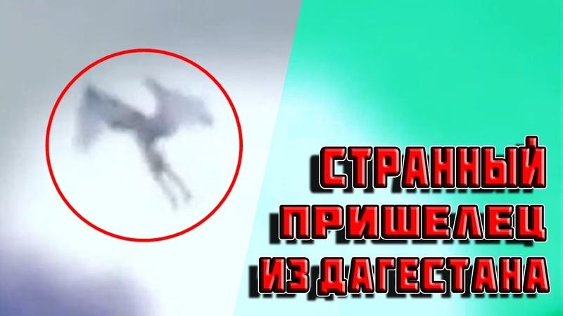 Странный пришелец из Дагестана ФАКТ или ВЫМЫСЕЛ №156