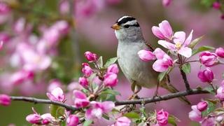 Утреннее пение птиц в лесу / Натуральные Звуки природы / Релакс