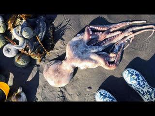 На камчатский пляж выбросило тысячи морских животных