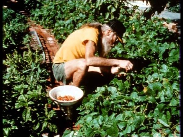 Грязь реж Д Эванс М Лидхолм К Уильямсон Данкамб DIRT a film on NYC garden activists incl Adam Purple