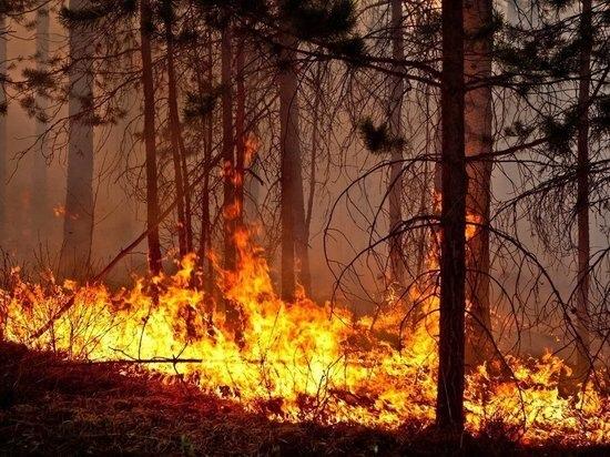 Чабан окурком случайно сжёг 4 гектара леса в Читинском районе