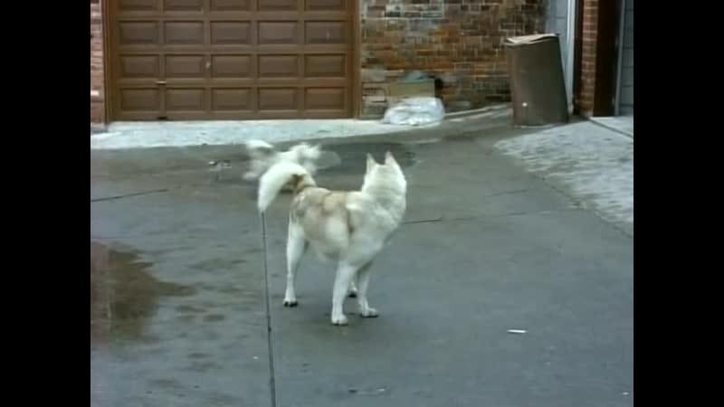 Строго на юг 1994 1999 драма комедия криминальный 16 я серия