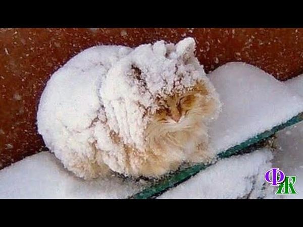 Связанный КОТ был почти занесён снегом На веках застыли корочки льда ему было даже больно моргать