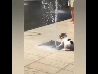 Ура! Я нашел водичку!