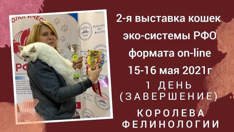 Конкурс Королева фелинологии 1 го дня выставки кошек РФО 15 16 05 2021г