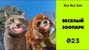 Смешные животные / Веселый Зоопарк / Говорящие коты / Озвучка животных / Подборка 023