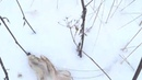 охота на зайца 15.01.2021
