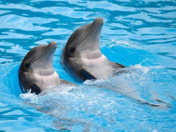 внешнему дельфин утро картинки оренбург, карта