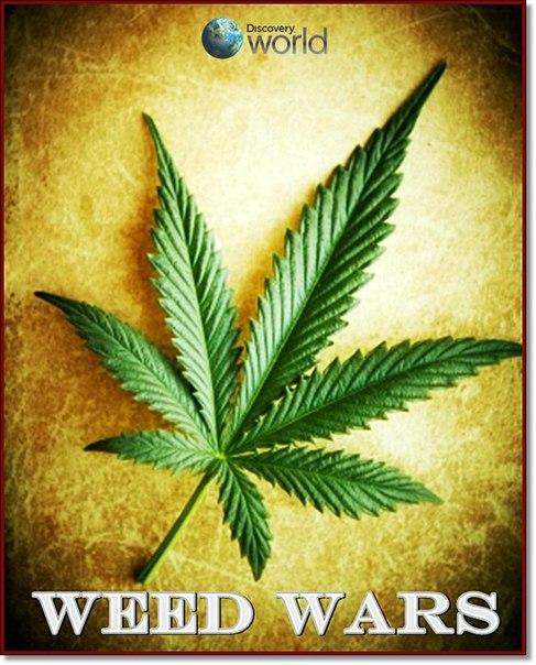 Дискавери марихуана дикорастущие растения конопля