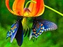 Личный фотоальбом Бабочки Зеленой