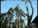 Валка дерева частями