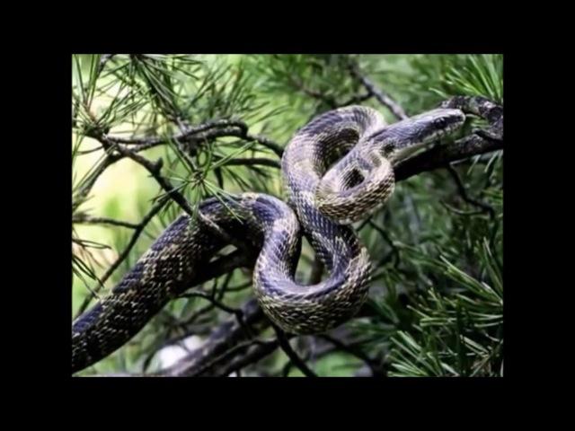 Документальный фильм Змеи гиганты