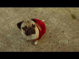 Премьера  Fall Out Boy - Irresistible (Starring Doug The Pug) ft. Demi Lovato