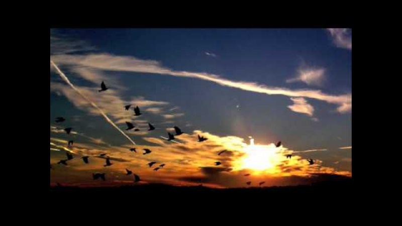 TBC NR Project - Flying Bird (Magdelaynas Final Flight Chilldown Mix)