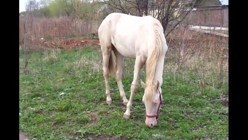 Коняшки щиплют траву на поляне квартал Абрамцево Балашиха