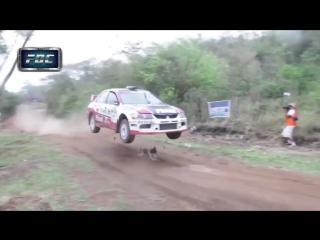 Машина перепрыгивает через собаку на ралли. rally car jumps over dog (with slow motion)