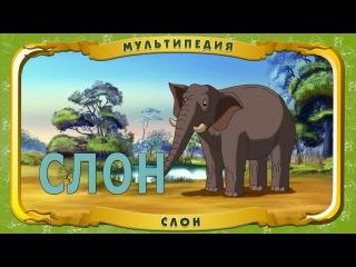 Мультипедия животных. Слон (Уроки тётушки Совы)