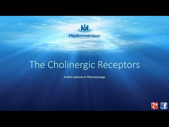 The Cholinergic Receptors