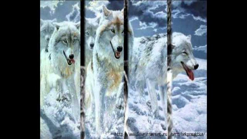 Белые волки mp4