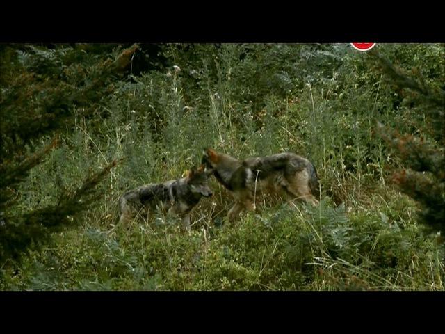 BBC Животный интеллект Органы чувств 1 серия