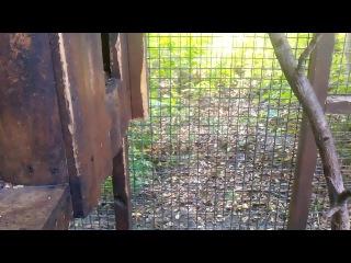 Зоопарк Черкаси Білка гризе камеру