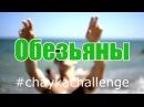18 Студенты-обезьяны в Чайке - T-Killah Дневник Хача