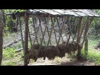 Тайны крымского леса. Mysteries of the Crimean forest