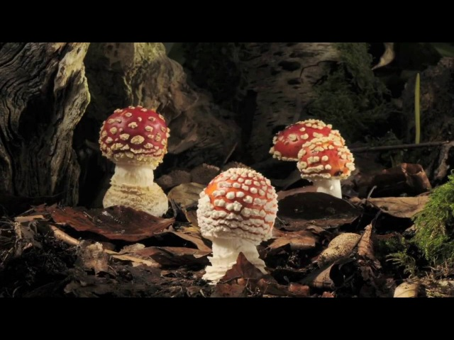 Jesus Weihnachtsmann Mithra und Magic Mushrooms