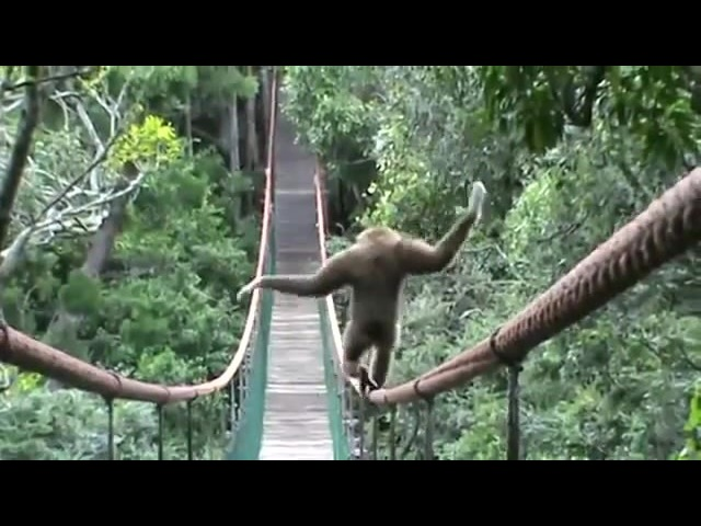 Gibbon Don't Worry 'Bout It