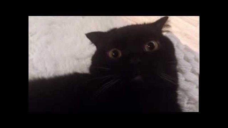 Смешной кот Funny Cat Compitation