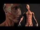 10 самых интересных фактов о мышцах 10 cfvs[ bynthtcys[ afrnjd j vsiwf[
