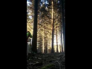 Эффект домино при валке леса