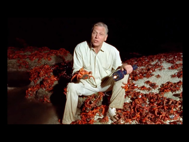 One Hundred Million Crabs The Trials of Life BBC Earth