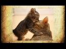 Любовь и дружба в мире животных Любовь и дружба между людьми и животными