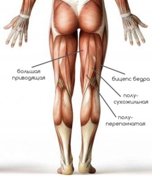мышцы галифе ног в картинках дагестане