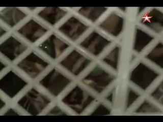 Мраморная кошка в Домодедово